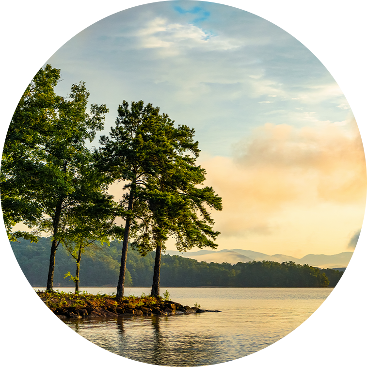 Picture of trees on Lake Jocassee
